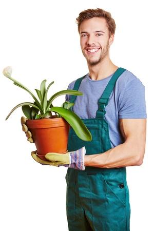 jardinero: Jardinero feliz celebración de una planta de pincel (Haemanthus albiflos)
