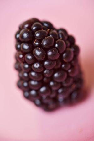 rubus: Closeup of a big ripe andean blackberry  Rubus sectio Rubus