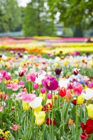 Park in spring with many blooming flowers and tulips Stock Photo - 19914572