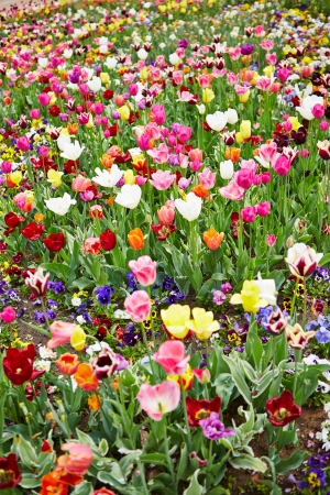 Field full of different flowers and colorful tulips Stock Photo - 20233959