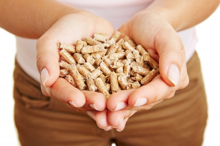 wood pellets: Woman holding many wood pellets in her hands Stock Photo