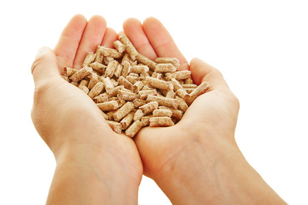 wood pellets: Two female hands holding many small wood pellets