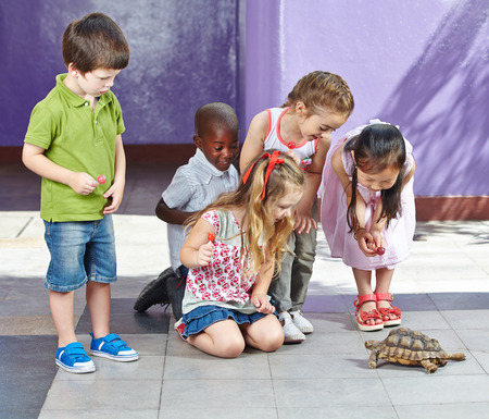 Interracial group of children in petting zoo looking at a turtle Stock Photo