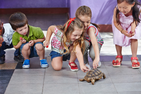 petting: Many happy children petting a turtle in a kindergarten playground Stock Photo