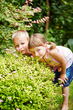 hide: Two children playing hide and seek in garden and hiding behind a bush