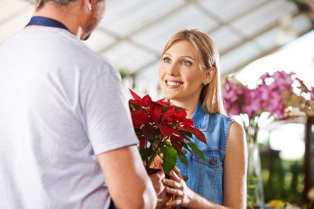 flor de pascua: Cliente femenino comprar poinsettia en una olla en un vivero