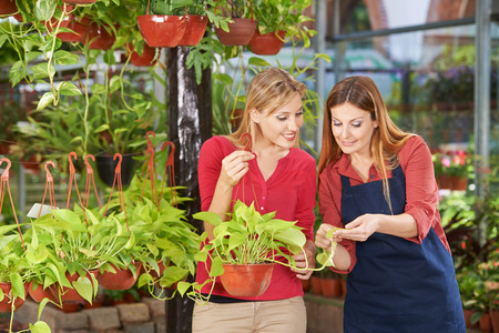garden staff: Woman getting competent advice in nursery shop from a gardener