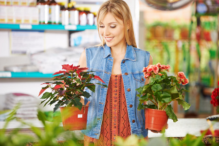 smiling woman in a greenhouse: Smiling woman comparing poinsettia and begonia in a nursery