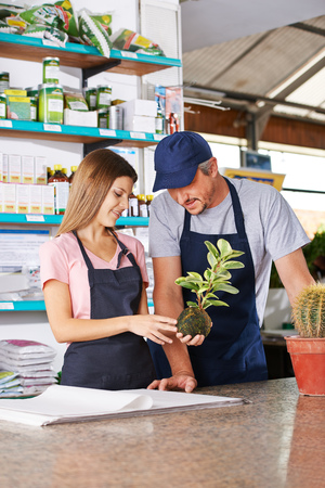 floristry: Young woman making apprenticeship in nursery shop with gardener and holding a kokedama