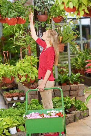 woman shopping cart: Woman in nursery shop with shopping cart buying different plants Stock Photo