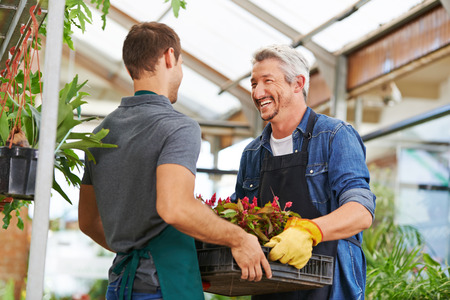help: Two happy men working together as gardener in nursery shop Stock Photo