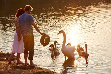 the offspring: Cisne defender descendencia de las personas en la orilla del lago