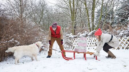 sledging people: Dog pulling sled with christmas gifts through snow in winter