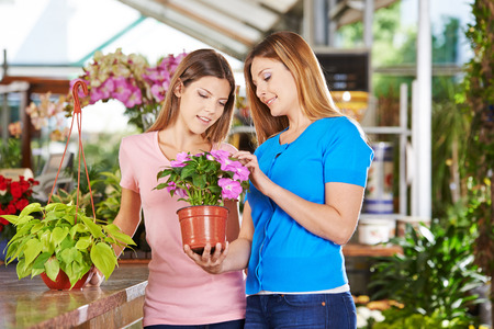 garden staff: Mother and daughter buying a plant (philodendron) in a nursery shop Stock Photo