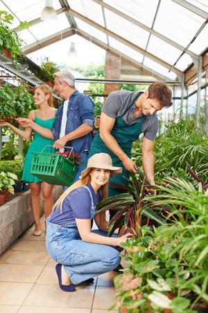 horticulture: Gardener and florist working in nursery shop on plants