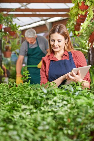 green plants: Woman with clipboard controlling plants in a garden center