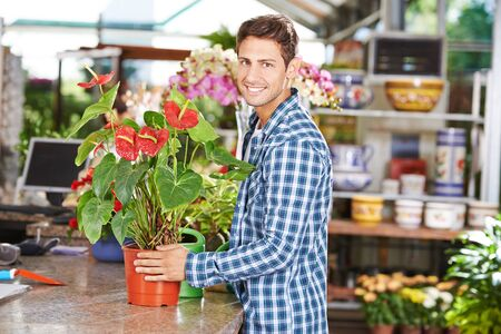 garden staff: Smiling man buying a flamingo flower in a pot in a nursery shop