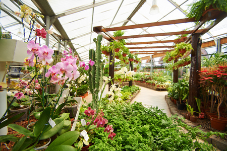 Veel groene planten en orchideeën in de kas van een kwekerij winkel