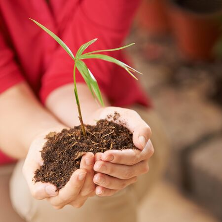 two hands: Two hands of a woman with seedling and soil giving safety Stock Photo