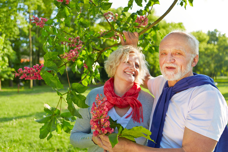 buckeye tree: Senior couple in spring under a blooming chestnut tree (Aesculus x carnea)