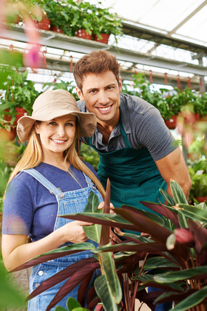 garden staff: Two employees of a nursery shop working in a greenhouse with plants