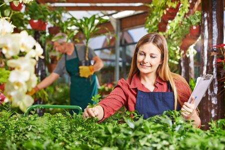 garden staff: Woman as gardener taking care of plants in a greenhouse Stock Photo