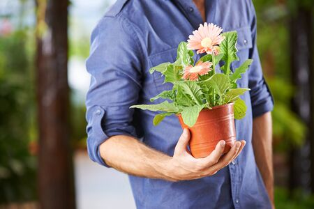plant hand: Hand of a man holding a flower pot with gerbera