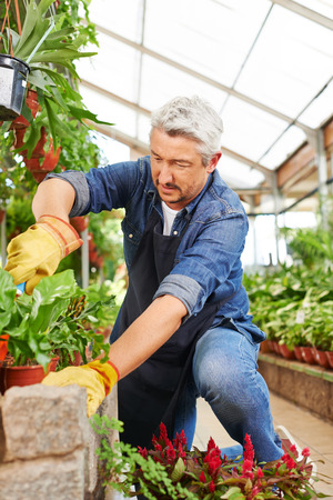 floristry: Gardener working in a greenhouse with garden shovel