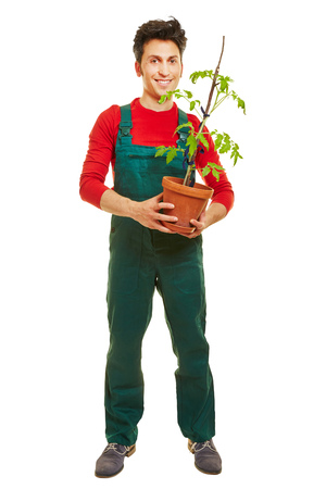 overall: Smiling gardener with green overall holding a tomato plant