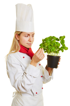 fresh pot: Female chef cook checking fresh pot of basil herbs for quality and taste Stock Photo
