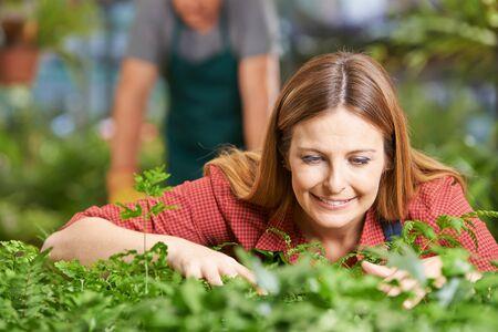 breeding: Smiling female gardener breeding plants in a nursery Stock Photo