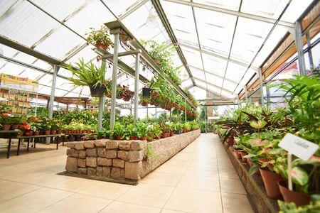 garden center: Empty hallway with many green plants in a garden center Stock Photo