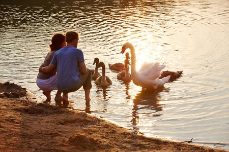 offspring: Pareja en el verano mirando al cisne en el lago con la descendencia Foto de archivo