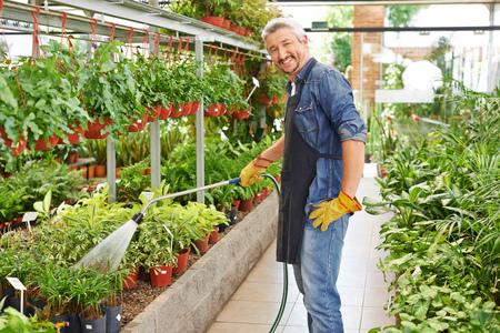 watering plants: Gardener watering plants in nursery shop with a water hose
