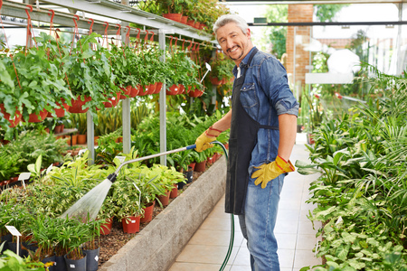 Gardener watering plants in nursery shop with a water hose