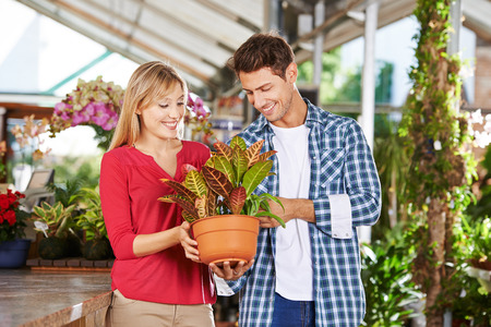 Happy couple shopping for a plant (codiaeum variegatum) in a nursery shop
