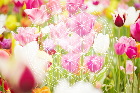 Flower of life as new age symbol on flower background
