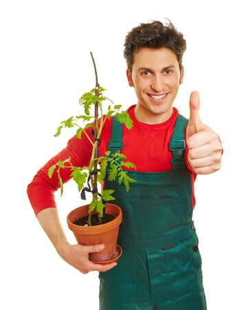 Happy gardener with tomato plant holding his thumbs up