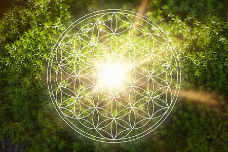 Hermosa flor de la vida en la naturaleza como concepto de fuerza vital de la nueva era energía y espiritualidad Foto de archivo