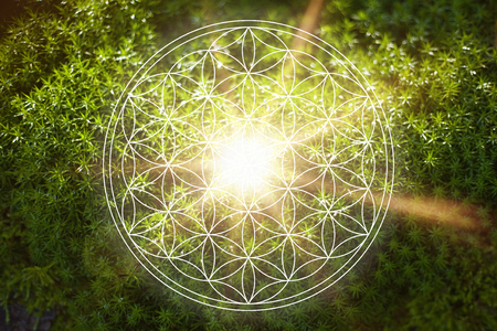 Beautiful flower of life in nature as new age energy and spirituality life force concept