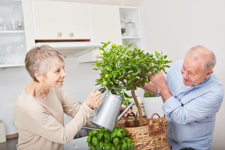 Happy senior couple gardening fruit tree in their kitchen as hobby
