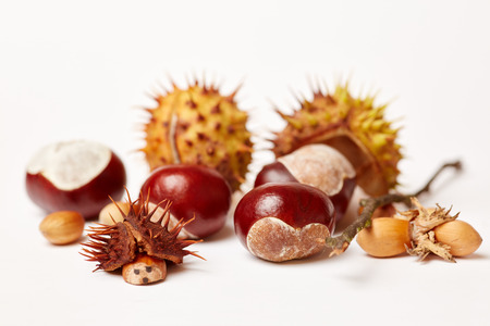 Chestnuts and acorns in autumn for making chestnuts figures