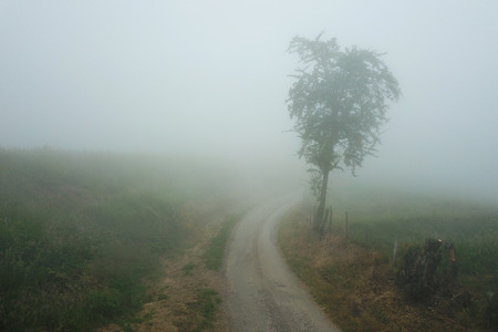 Narrow path in the fog beside tree from above
