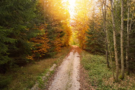 Sunny path through a forest with colorful leaves in autumn Banque d'images - 121134414