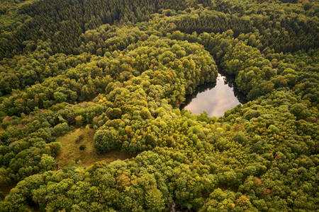Green forest with a small lake in summer at the Asberg, Germany Banque d'images - 121134417