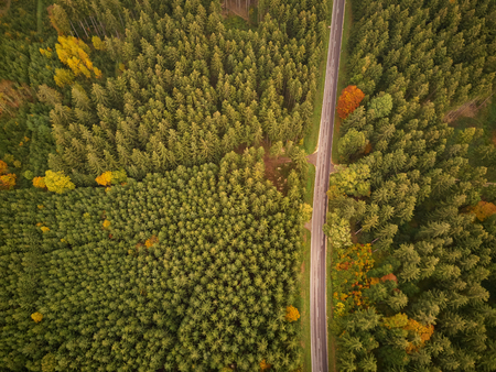 Empty road through forest from above in autumn Banque d'images - 121134434