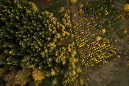 Small young trees in nursery at the forest from above in autumn Banque d'images - 121134435