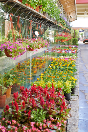 Many colorful flowers are outside in front of a nursery Imagens