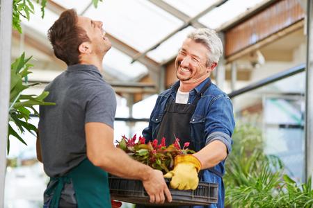 Dos hombres como floristas trabajan juntos en un vivero