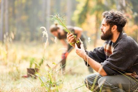 Forstarbeiter kontrolliert die Qualität von Kiefernsetzlingen für die Aufforstung Standard-Bild